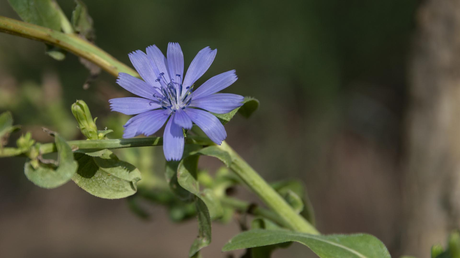Lilac Flower I