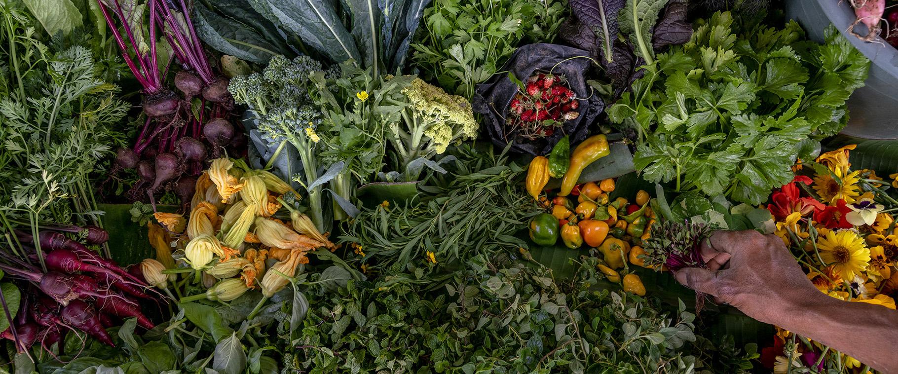 Harvest V